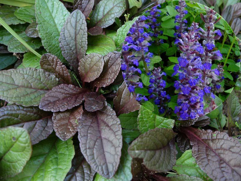 Ленивый сад: неприхотливые цветы для вашего сада