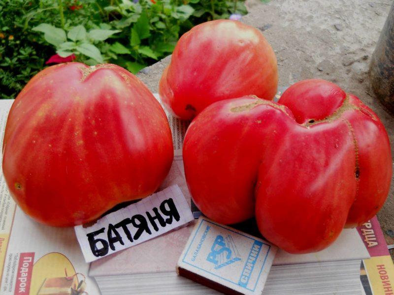 Сорт томатов Батяня: описание, преимущества, специфика выращивания