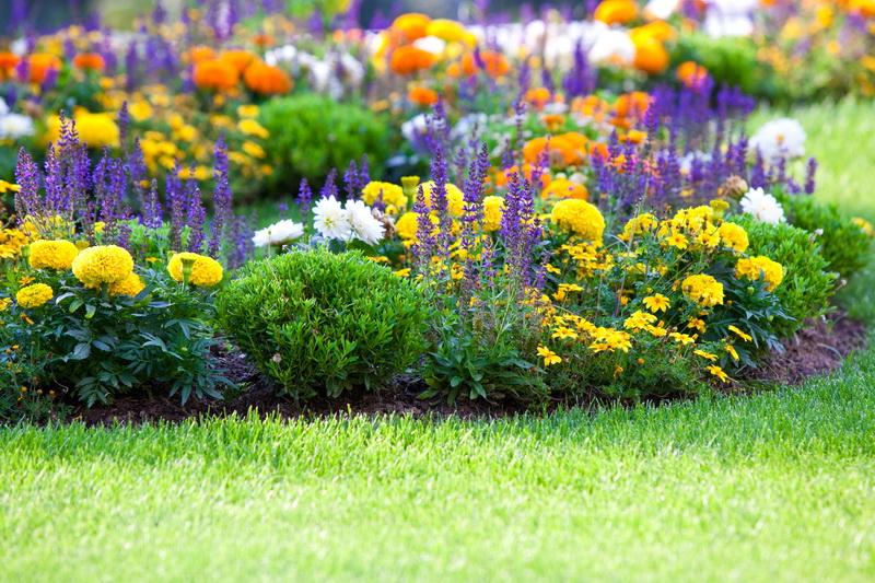 Как правильно сочетать растения на цветочных клумбах