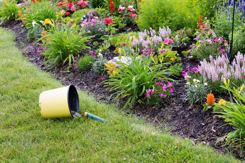 Декоративные кустарники в оформлении садового участка