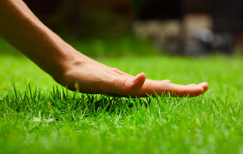 Своими руками: озеленение и благоустройство дачного участка