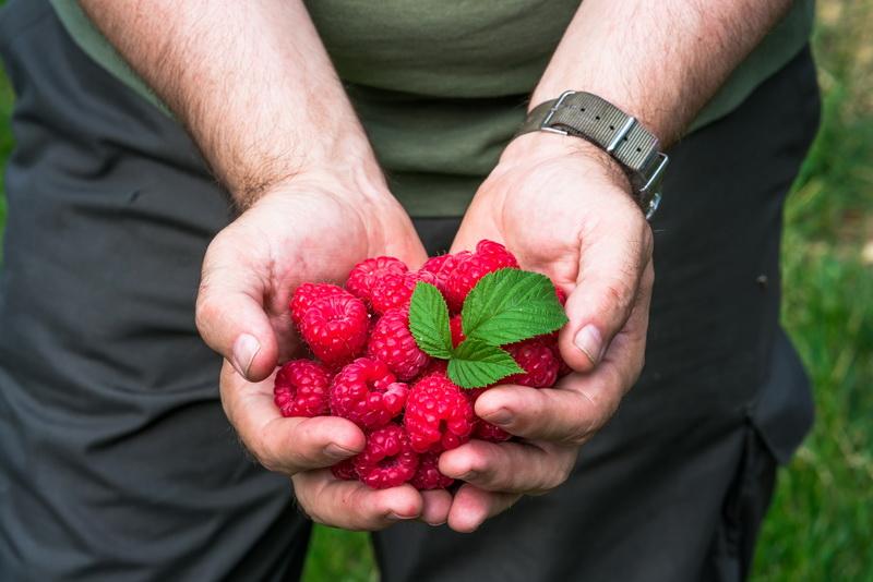 Малиновая сказка для холодной зимы — предлагаю рецепты простых заготовок из ароматной ягоды