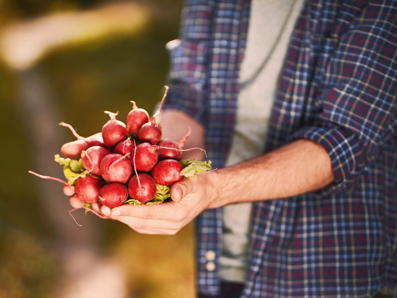 Какой же огород без Редиса? Рассказываю про свои любимые Сорта на все случаи жизни — они никогда меня не подводят