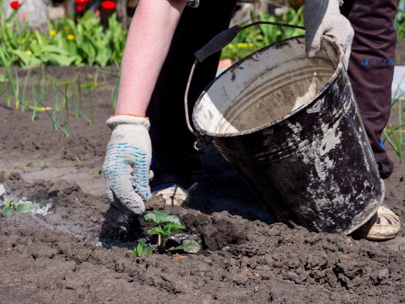 Никогда не забывайте про удобрение огорода в осенний период — рассказываю, в чем именно нуждаются ваши растения