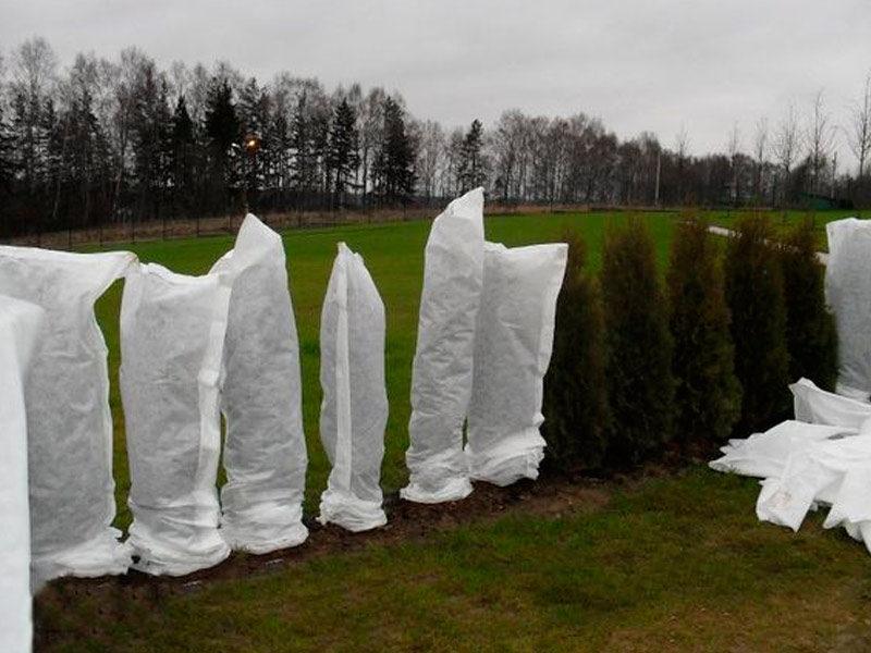 Зимние холода — испытание для садовых Деревьев. Мои всегда выдерживают его. Рассказываю, что я для этого делаю