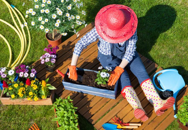 Осуществляем правильную посадку в горшки декоративных растений