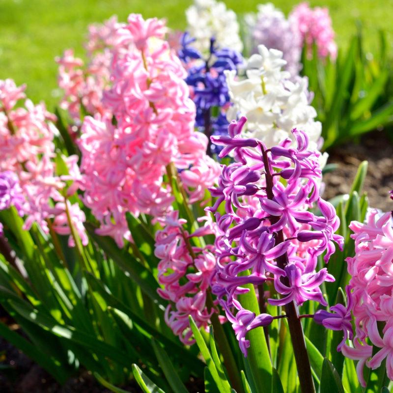 Цветы, которые можно посадить осенью, — продлеваем лето в саду
