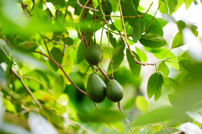 Лучший декор для беседки: многолетние вьющиеся растения