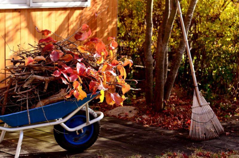 Осенняя уборка растительных остатков с огорода и сада — необходимость или нет?