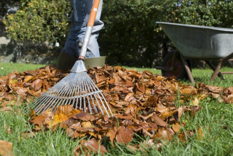 Польза от опавшей листвы — как можно использовать потенциальный мусор