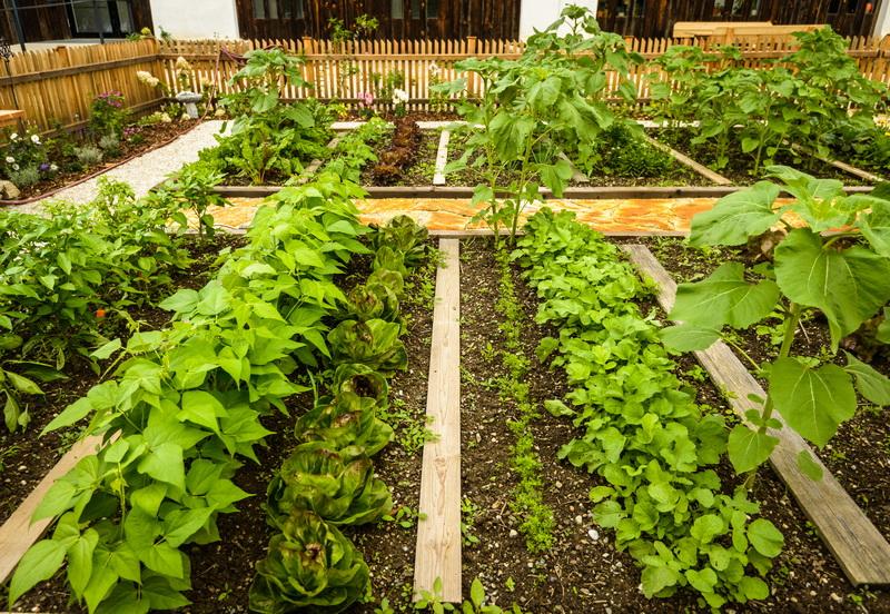 «Мал огород, да дорог»: как получить хороший урожай на очень ограниченной площади