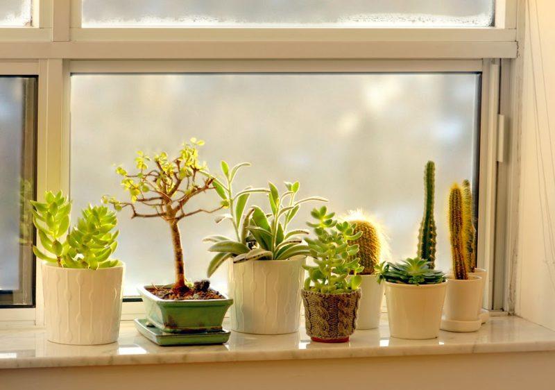 Какие необычные растения можно вырастить на подоконнике
