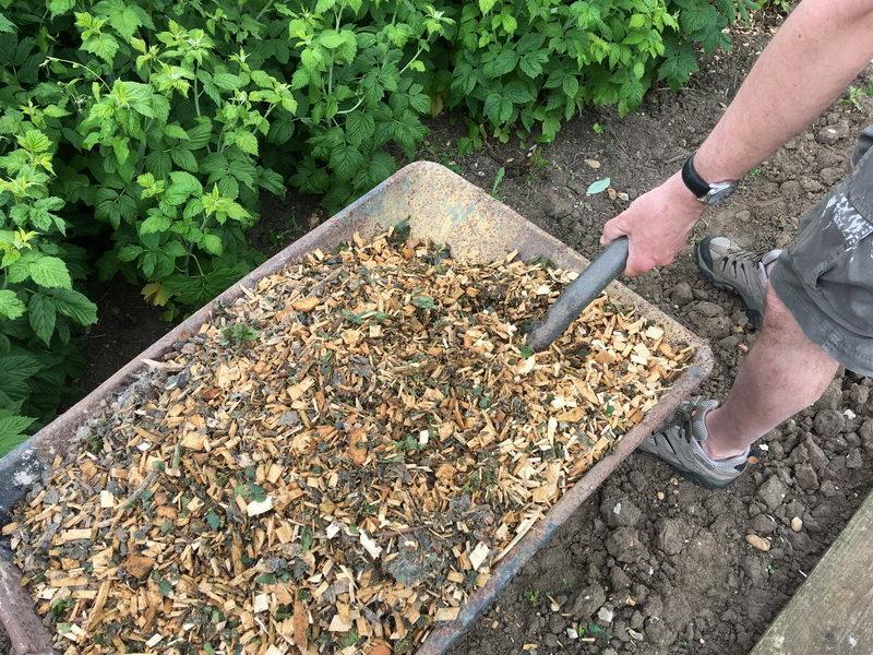 Какие материалы использовать для осеннего и весеннего мульчирования малины