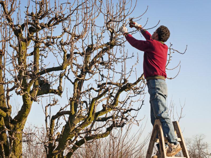 Топ-3 дела, которые надо выполнить в саду зимой