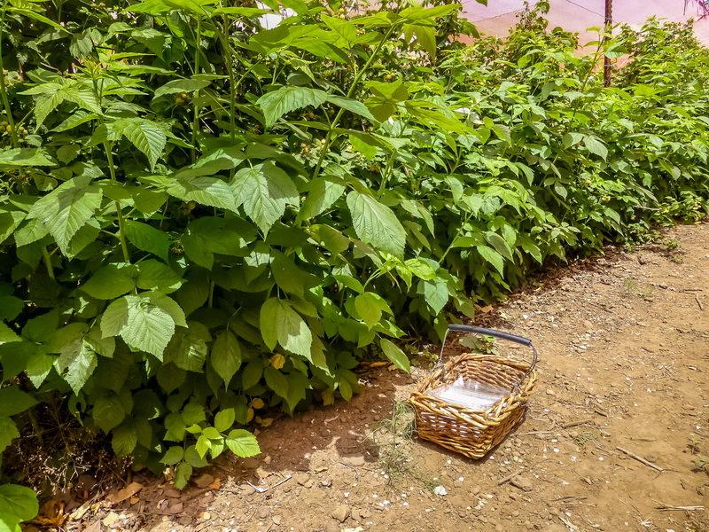 Самое начало. Обработка ягодных кустарников ранней весной