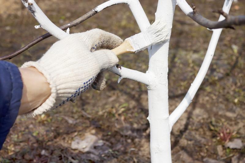 Осенняя обработка садовых деревьев от вредителей и болезней