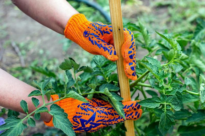 Подвязка кустов томатов: 5 популярных способов