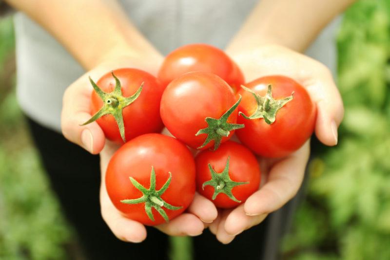 Как правильно сохранить томаты в свежем виде до зимы