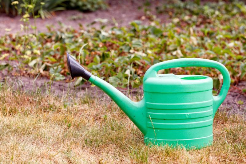 Чем удобрять клубнику осенью, чтобы добиться ее обильного плодоношения в следующем сезоне
