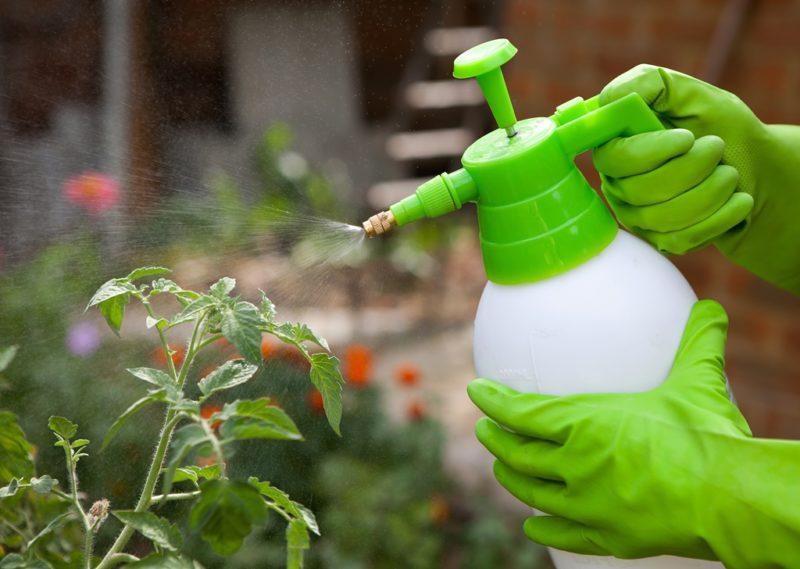 Эффективные препараты для защиты семян томатов