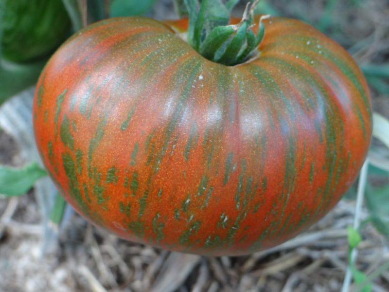 Лучшие сорта полосатых томатов