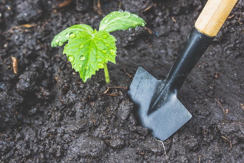 Посадка кабачков — как получить быстрый урожай