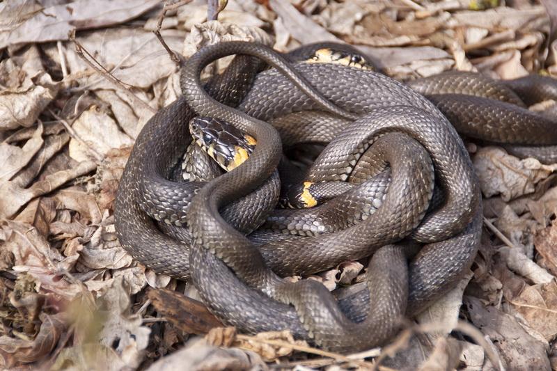 Способы избавления участка от змей