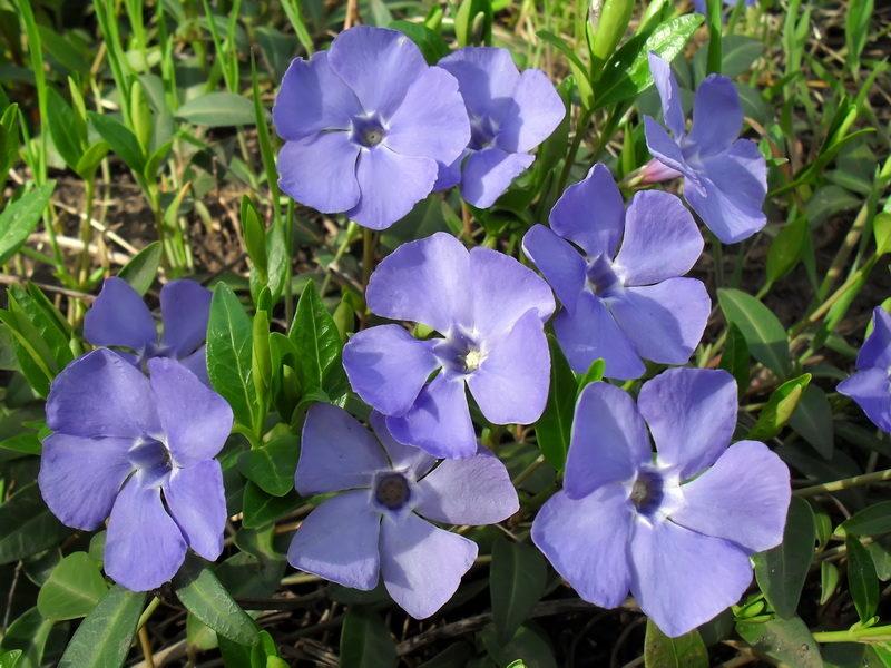 Какие растения можно высаживать за дачным домом в тени — альтернатива газону