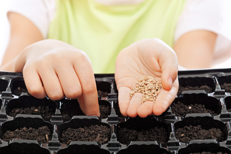 Важные рекомендации по выбору семян огурцов для наилучшего урожая