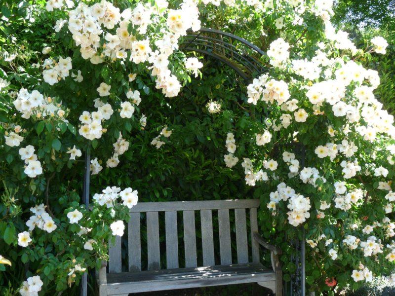 6 видов цветников, плачущих по королеве сада, или Как обустроить на даче собственный розарий