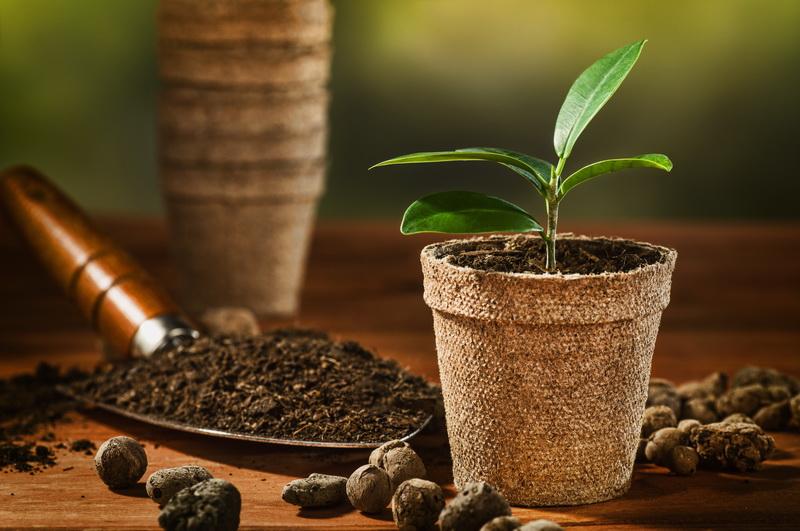 Кофейная гуща предскажет хороший урожай. Используйте это!