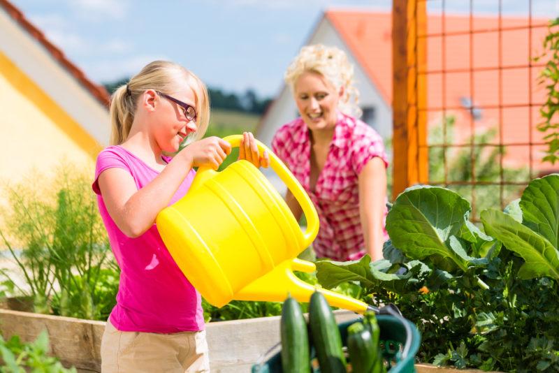 Залог хорошего урожая. Чем подкормить огурцы — лучшие минеральные и органические удобрения