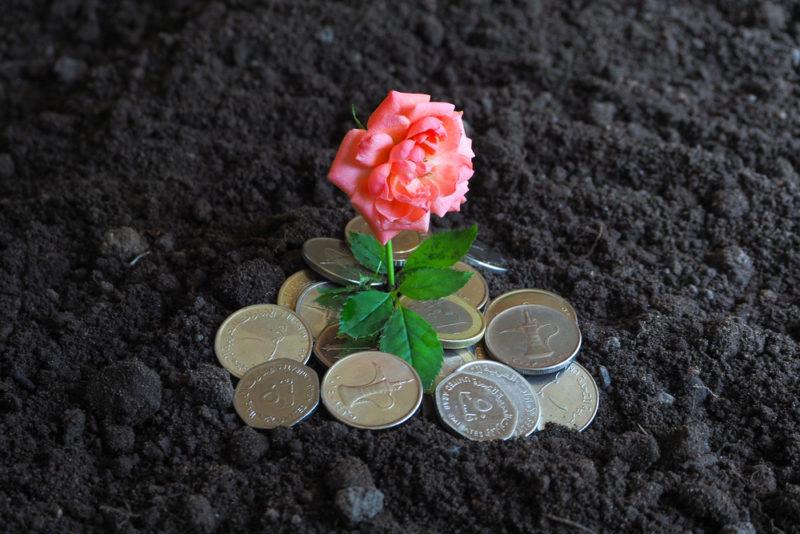 Правильная посадка роз весной: тонкости процедуры