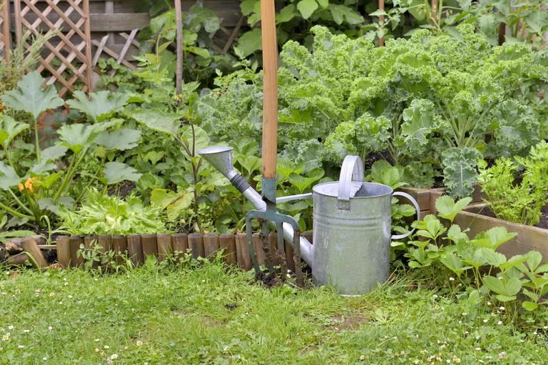 Как эффективно продлить сроки плодоношения кабачков