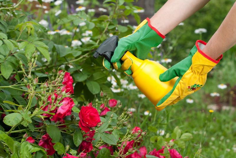 Осенняя подкормка роз: как сделать все правильно