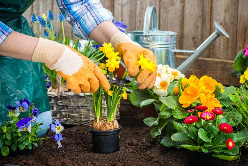Такие разные нарциссы. 9 самых красивых сортов для вашего сада