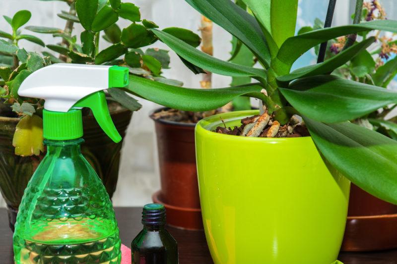 Секреты подкормки домашних орхидей