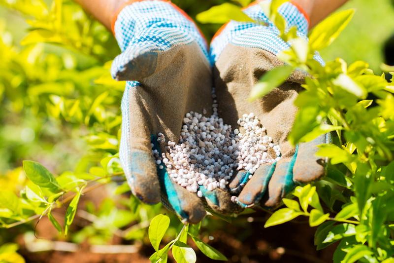 Калий, фосфор, азот — важные элементы для роста растений