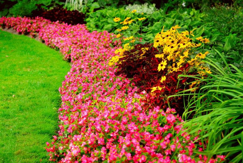 Клумба непрерывного цветения — эффектное украшение участка с начала весны и до поздней осени