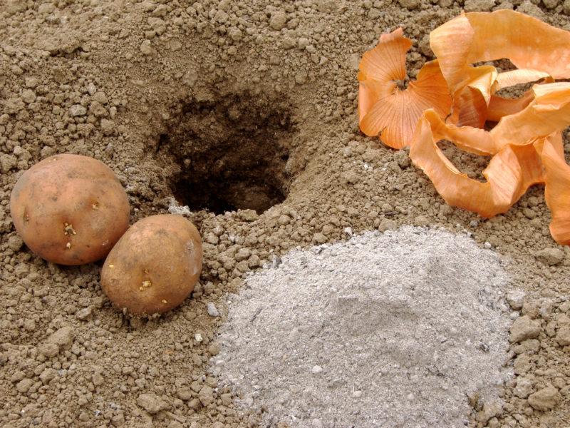 Сажаем картофель — 12 лучших методов