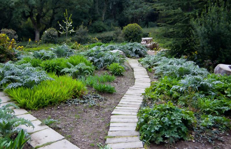 Как можно избавиться от растительности между тротуарной плиткой