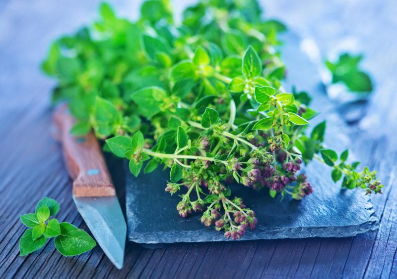 Модные ароматные травки — выращиваем настоящее сокровище в своем огороде