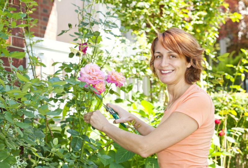 Чтобы ничего не забыть. Как ухаживать за розой по завершении цветения — 5 процедур, без которых не обойтись