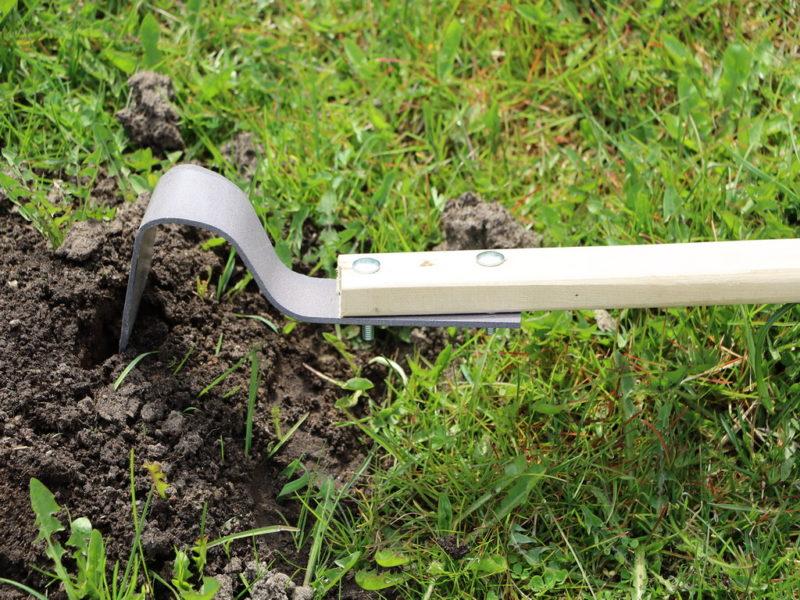 Полольник — в огороде пособник