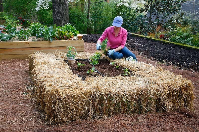 Кто сказал, что огород — не место для экспериментов? Необычные грядки для вашего участка