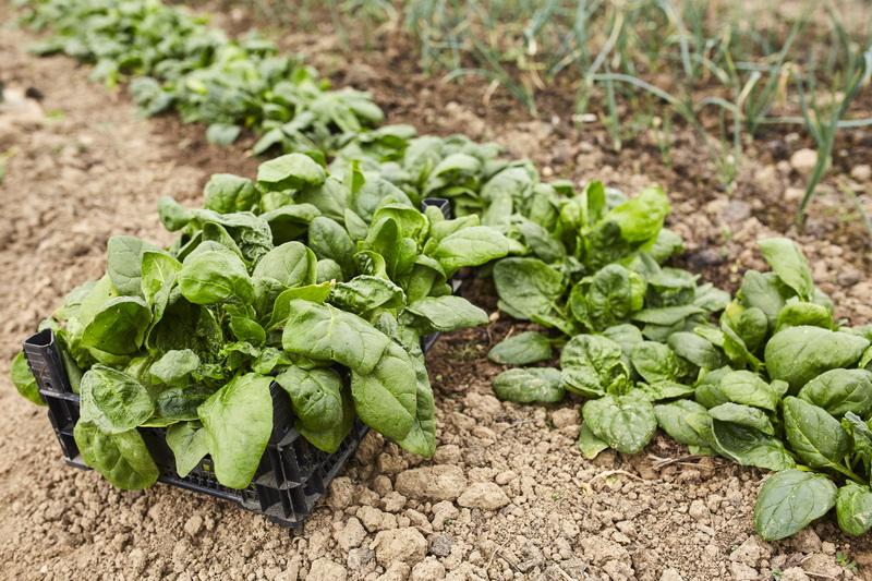 Соблюдение температурного режима — залог крепкой рассады: комфортные условия выращивания различных культур