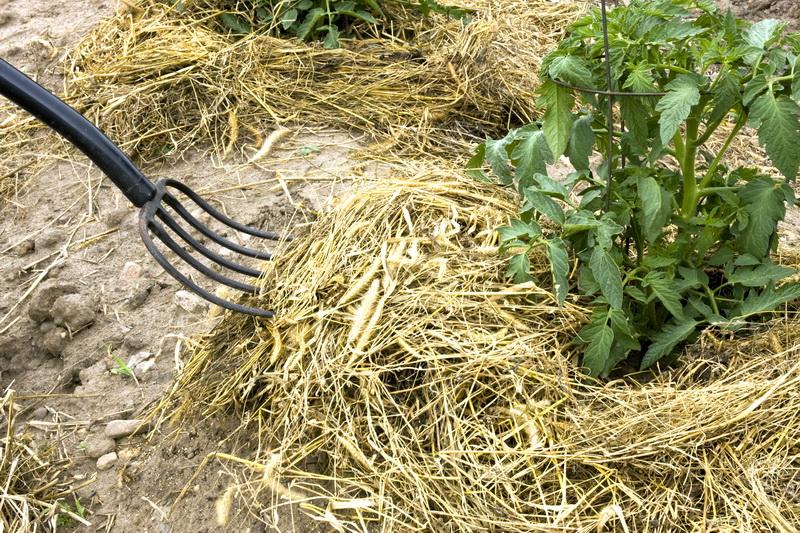 Полезное применение скошенной травы с газона