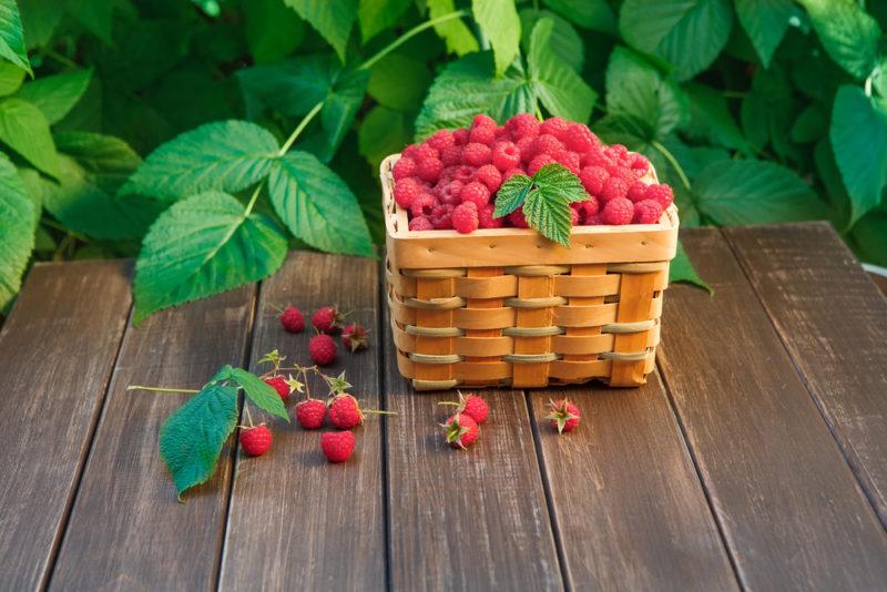 За органикой — будущее, или Выращиваем ягоды без всякой «химии»