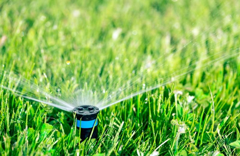Как сохранить свежесть газона в летнее время
