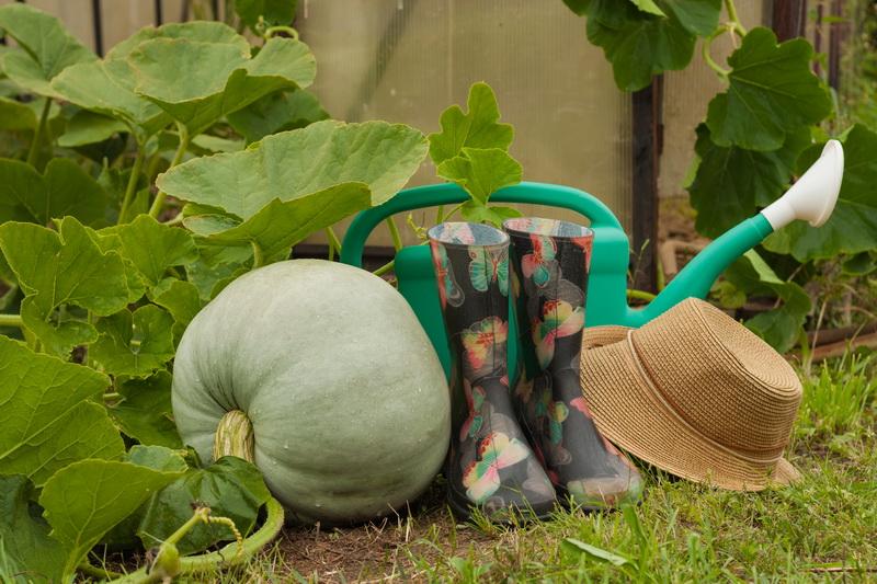 Как вырастить тыкву через рассаду: пошаговая инструкция для новичков